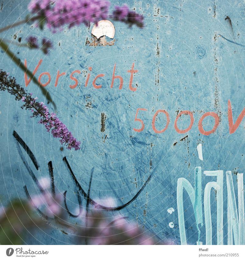 5000V Pflanze Sträucher Blüte Wildpflanze Fliederbusch Mauer Wand Fassade Zeichen Schriftzeichen Ziffern & Zahlen Graffiti trashig Kreativität Warnung