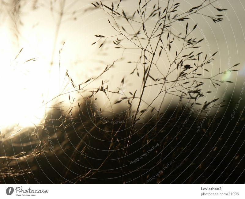 Gras an einem Oktoberabend Sonne Wiese Romantik Halm