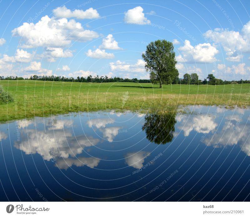 nach dem Regen Umwelt Natur Landschaft Pflanze Wasser Himmel Wolken Wetter Baum Gras Wiese Seeufer Moor Sumpf Teich Ungarn grün blau Spiegel Schatten schön