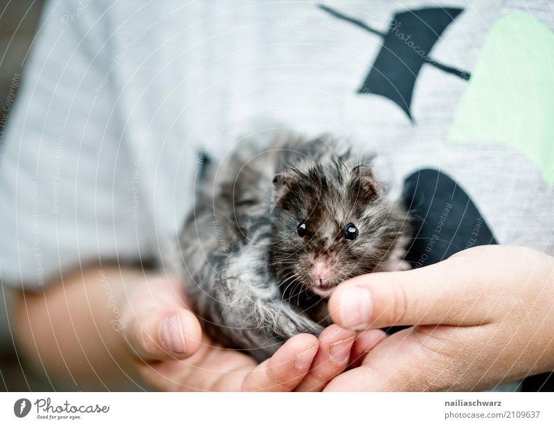 kleines Meerschweinchen schön Sommer Kind Hand Finger Tier Haustier Hamster Nagetiere 1 beobachten festhalten Blick Spielen Umarmen kuschlig nah natürlich
