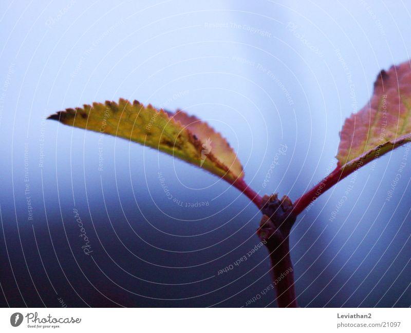 Herbstwetter Oktober Herbstfärbung Blatt Pflanze mehrfarbig kalt Nebel feucht Farbe Nahaufnahme Makroaufnahme herbstlich