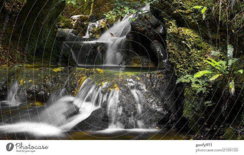 Herbst Natur Pflanze grün Wasser Landschaft Tier Umwelt kalt natürlich Bewegung Gras Freiheit Stein Ausflug träumen