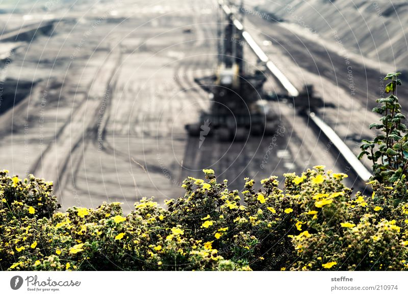 Blümchenfoto mit Jungszeuch Blume Landschaft Energie Energiewirtschaft Sträucher Maschine Bagger Kohle Experiment Rohstoffe & Kraftstoffe Braunkohlentagebau Braunkohle Grube Braunkohlenbagger