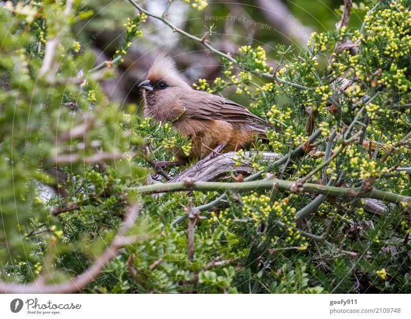 Irokesenschnitt ;-))) Ausflug Abenteuer Safari Expedition Natur Landschaft Frühling Sommer Pflanze Baum Sträucher Blatt Wald Südafrika Afrika Tier Wildtier