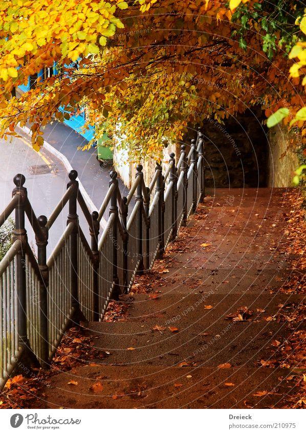 ...frueher als erwartet Baum Blatt Farbe gelb Herbst Umwelt Wege & Pfade Stein Metall Park Wetter braun gold gehen Treppe Europa