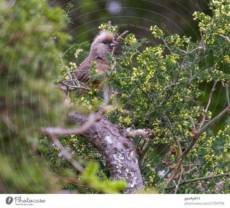 Versteckspiel Natur Pflanze Sommer Baum Landschaft Blatt Tier Wald Umwelt Frühling natürlich Vogel Ausflug elegant Wildtier Sträucher