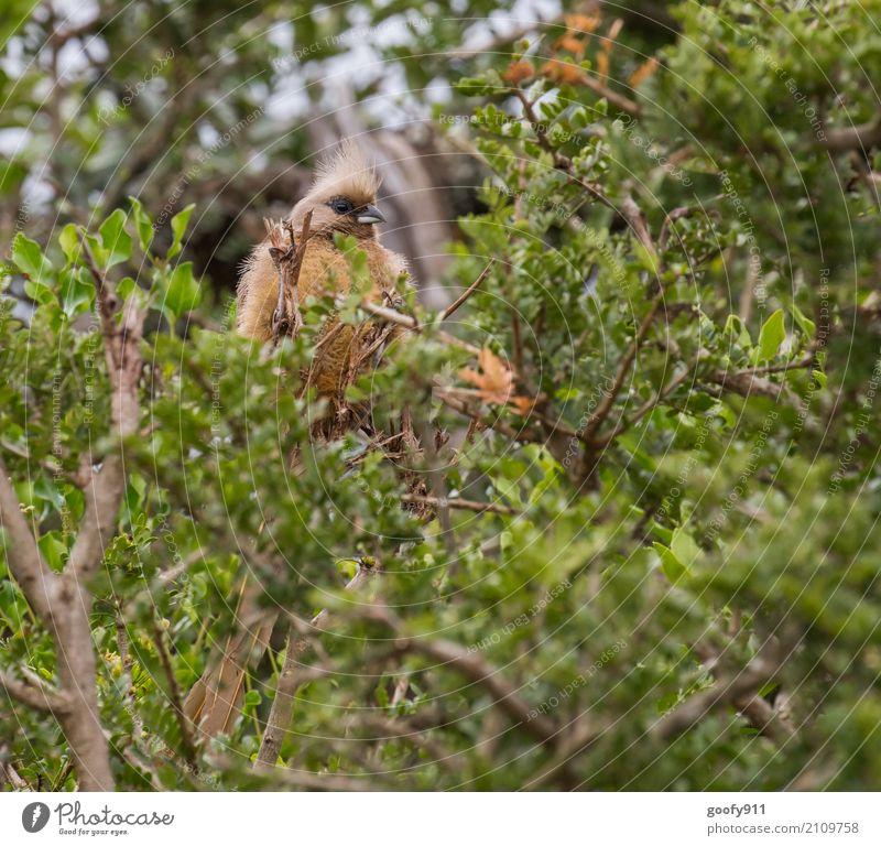 Im Gestrüpp Natur Pflanze Sommer Baum Landschaft Blatt Tier Wald Umwelt Frühling natürlich Vogel Ausflug elegant Wildtier Sträucher