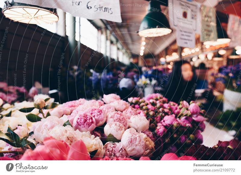 Roadtrip West Coast USA (257) Pflanze rosa Markthalle Seattle Blüte Blütenknospen Blumenstrauß Deckenlampe Pfingstrose mehrfarbig Blumenmeer Duft Farbfoto