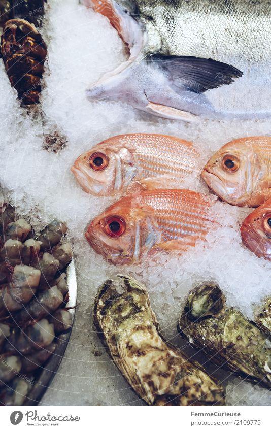 Roadtrip West Coast USA (245) Lebensmittel Fisch Meeresfrüchte Ernährung Tier genießen rote schnapper Schnapper Raubfisch Fischmarkt Markthalle Markttag Eis