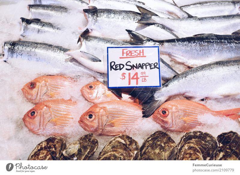 Roadtrip West Coast USA (247) Lebensmittel Fisch Meeresfrüchte Ernährung genießen Schnapper US-Dollar Preisschild Englisch Westküste Fischereiwirtschaft Eis