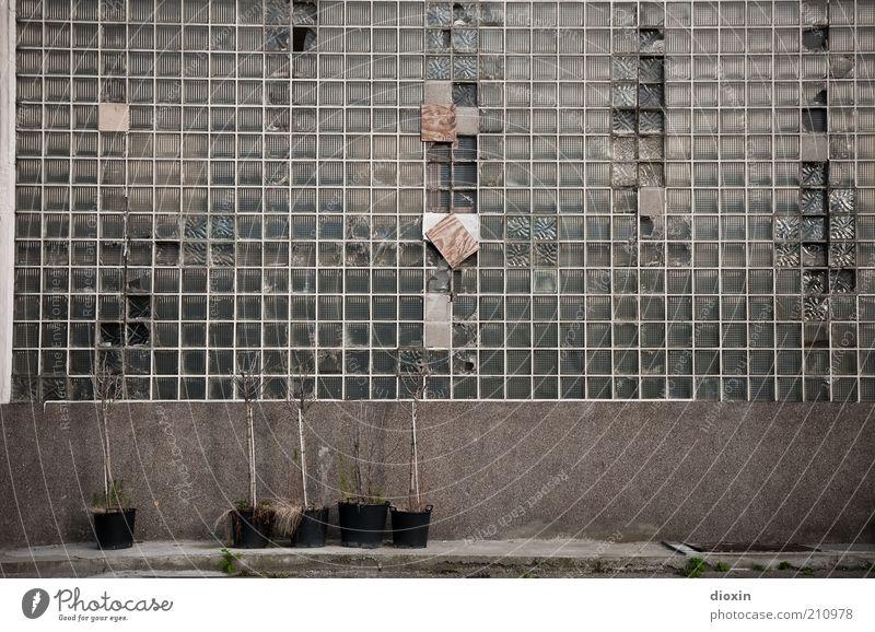 rotten potted plants Pflanze Topfpflanze Bauwerk Gebäude Architektur Fassade Glasbaustein alt Verfall verfallen verfaulen Außenaufnahme Menschenleer abrissreif