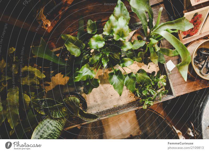 Roadtrip West Coast USA (177) Natur Vogelperspektive Blumenladen Gartenhaus Grünpflanze Topfpflanze Zimmerpflanze Pflanze Postkarte Tisch