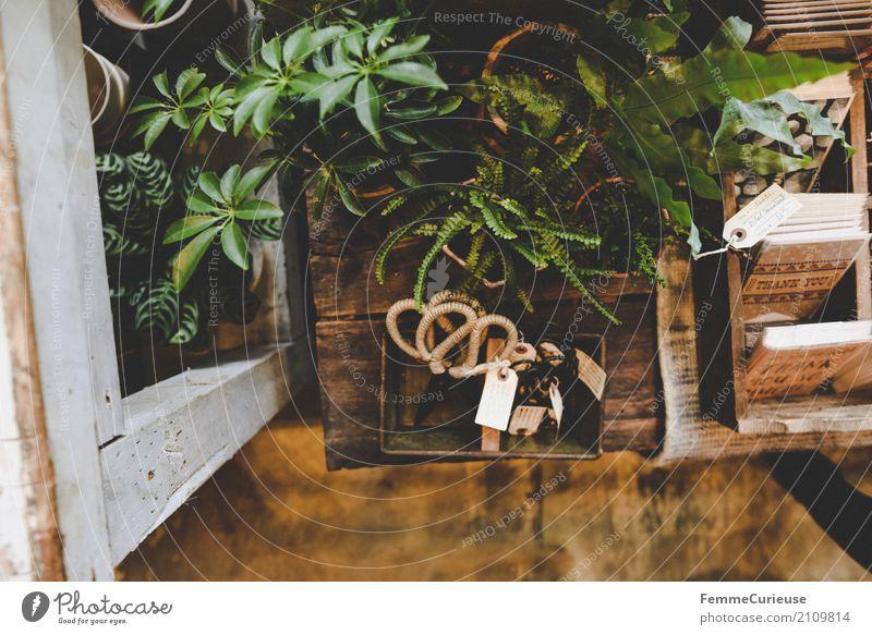 Roadtrip West Coast USA (173) Natur Blumenladen Pflanze Grünpflanze Zimmerpflanze Topfpflanze Regal Tisch Setzkasten Postkarte kaufen Vogelperspektive