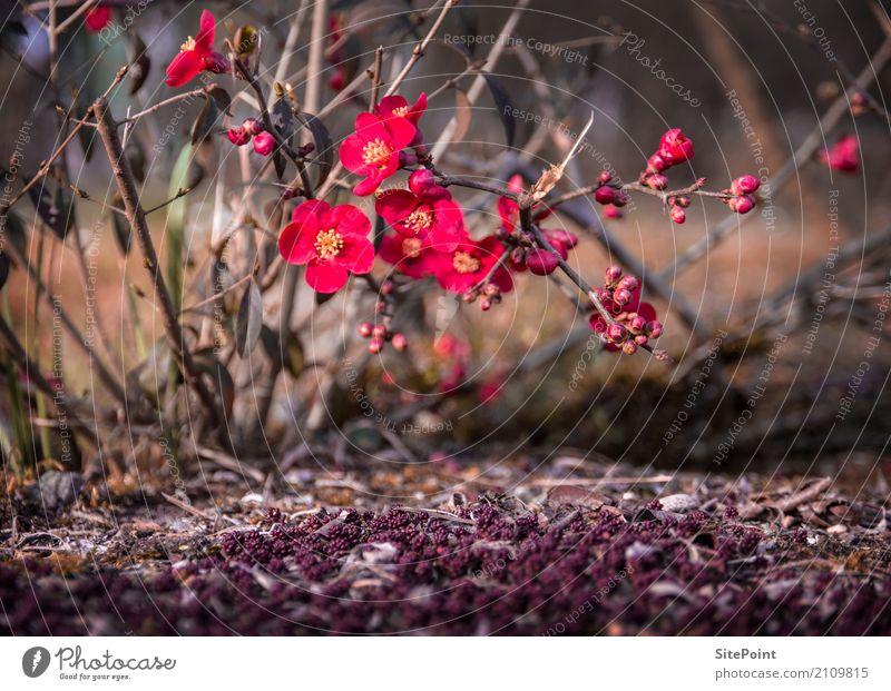 Letzte Herbstgrüße Natur Pflanze Sträucher Blüte Wildpflanze Garten Park Blühend Warmherzigkeit schön Farbfoto Außenaufnahme Dämmerung Licht Unschärfe