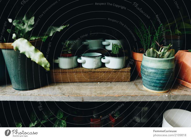 Roadtrip West Coast USA (175) Natur Blumenladen Gartenhaus Häusliches Leben Dekoration & Verzierung Naturliebe Pflanze Keramik Blumentopf Topfpflanze