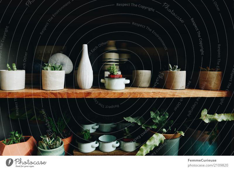 Roadtrip West Coast USA (178) Natur Blumentopf Topfpflanze Blumenvase Vase Regal Holzregal Einlegeböden Zimmerpflanze Grünpflanze Pflanze Kaktus