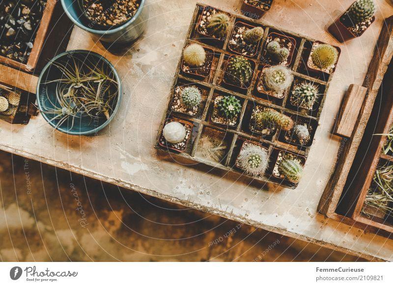 Roadtrip West Coast USA (176) Natur Blumenladen Gartenhaus Gewächshaus Häusliches Leben Dekoration & Verzierung Kaktus Kakteenstacheln Setzkasten Tischplatte