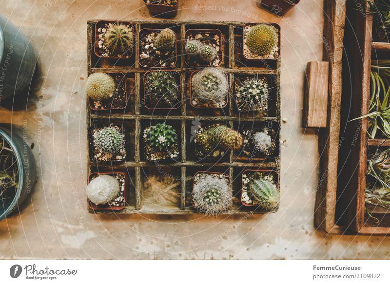 Roadtrip West Coast USA (172) Natur Kaktus Kakteenstacheln Setzkasten Holz Tisch Blumenladen Pflanze Kakteenerde Dekoration & Verzierung Häusliches Leben