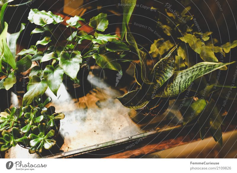 Roadtrip West Coast USA (174) Natur Blumenladen Gartenhaus Gewächshaus Grünpflanze Zimmerpflanze Topfpflanze Pflanze Tisch Tischplatte Sonnenlicht