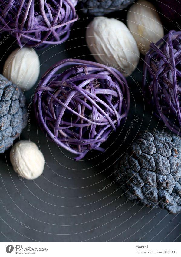 Dekoration weiß grau Frucht Perspektive violett Freizeit & Hobby Dekoration & Verzierung Basteln verschönern getrocknet Kunsthandwerk Bastelmaterial