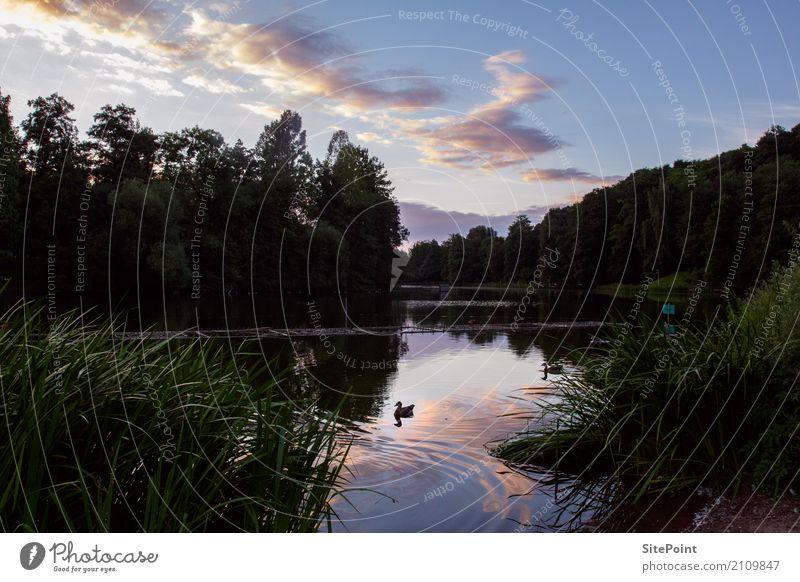 Abendidylle am See Natur Pflanze Sommer schön Wasser Landschaft Wolken Tier Frühling Küste Garten Vogel träumen Zufriedenheit Park wandern