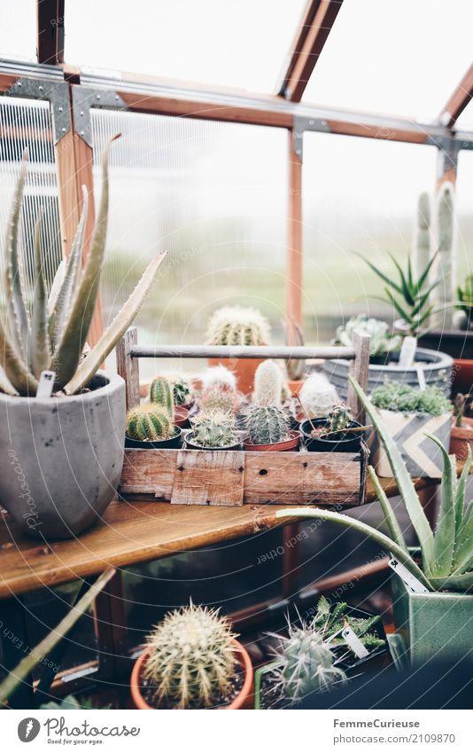 Roadtrip West Coast USA (149) Kaktus Gewächshaus Kakteenstacheln Topfpflanze Blumentopf Fenster Holztisch Holzplatte Dekoration & Verzierung Pflanze