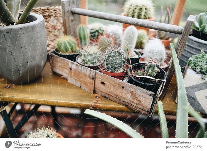 Roadtrip West Coast USA (147) Pflanze grün Gewächshaus Holzkiste Holzbank Kaktus Kakteenstacheln wohnlich Dekoration & Verzierung Haus Kiste Blumentopf