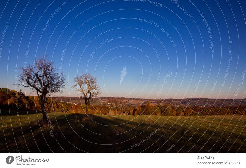 Herbstspaziergang Natur Landschaft Schönes Wetter Baum Feld Wald ruhig Sehnsucht Fernweh Einsamkeit Farbfoto Gedeckte Farben Außenaufnahme Tag Totale