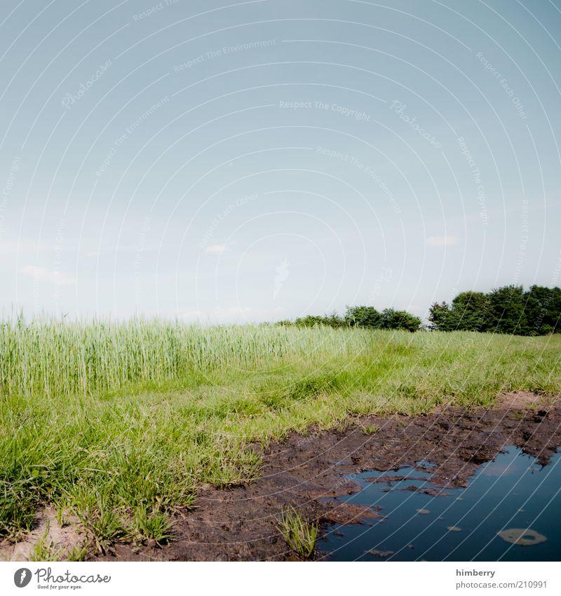 loch nass Umwelt Natur Landschaft Pflanze Wasser Himmel Wolkenloser Himmel Frühling Sommer Klima Wetter Schönes Wetter Wiese Feld Moor Sumpf Teich