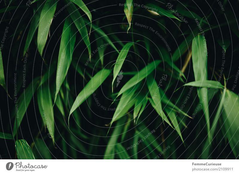 Roadtrip West Coast USA (151) Natur grün Naturliebe Pflanze Blatt Garten Park Grünpflanze saftig Pflanzenteile Sträucher Farbfoto Außenaufnahme Tag Licht