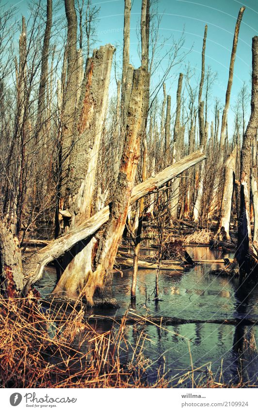 stammkunden Natur Wasser Baum Landschaft Umwelt Vergänglichkeit Überleben Moor Usedom Moorsee