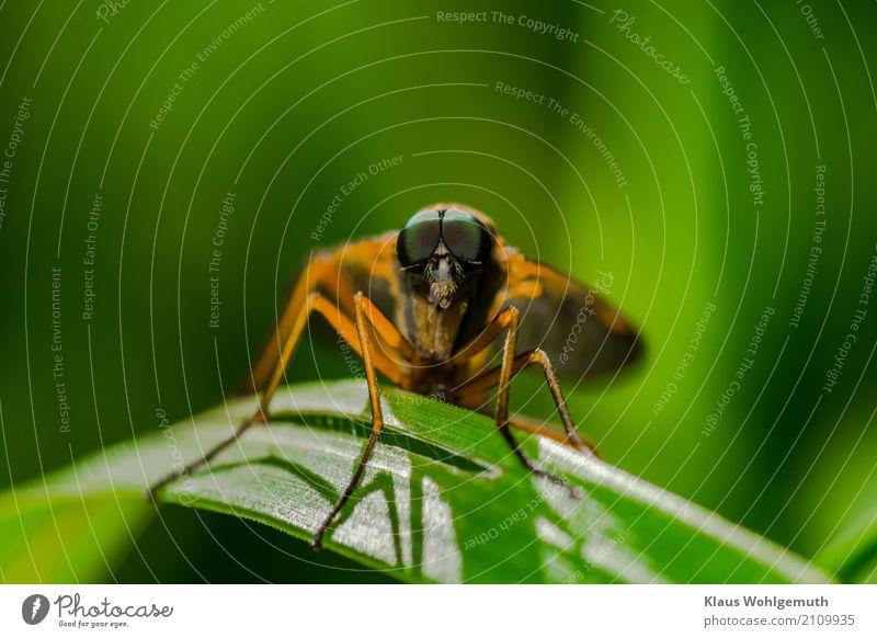 Blickkontakt Natur Sommer grün Tier Wald Umwelt Wiese Gras orange sitzen beobachten