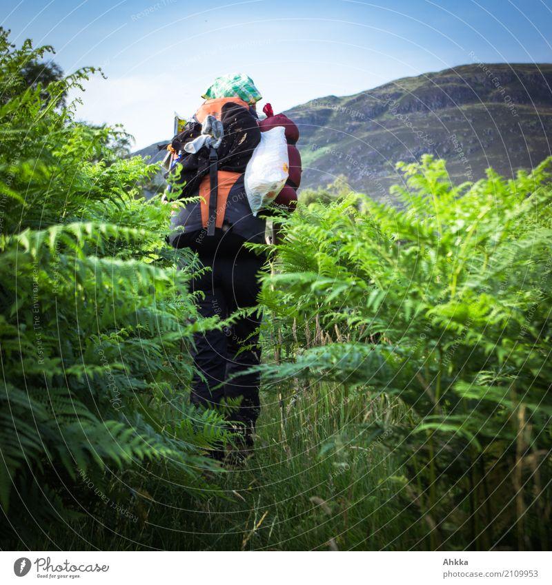 Junge Frau mit Wanderrucksack im grünen Blätterwald, Rückansicht Natur Ferien & Urlaub & Reisen Jugendliche Tier Ferne Umwelt Wege & Pfade Ausflug wild wandern