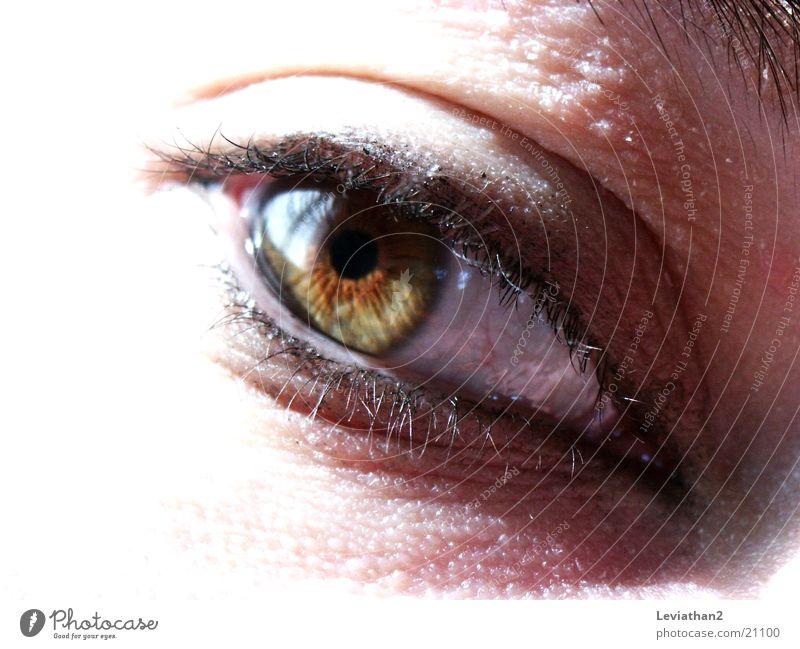 Ansichten eines Auges Mensch grün Auge hell braun Wimpern