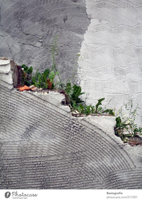 Unkraut vergeht nicht Pflanze Wand grau Mauer Wege & Pfade Architektur Beton Treppe Wachstum trist Löwenzahn Blume Betonwand