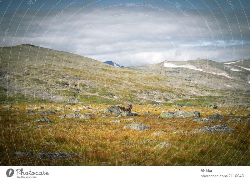 Suchbild Natur Farbe Landschaft Tier natürlich klein wild Horizont Wildtier Armut Vergänglichkeit Klimawandel stagnierend Skandinavien Endzeitstimmung Rentier