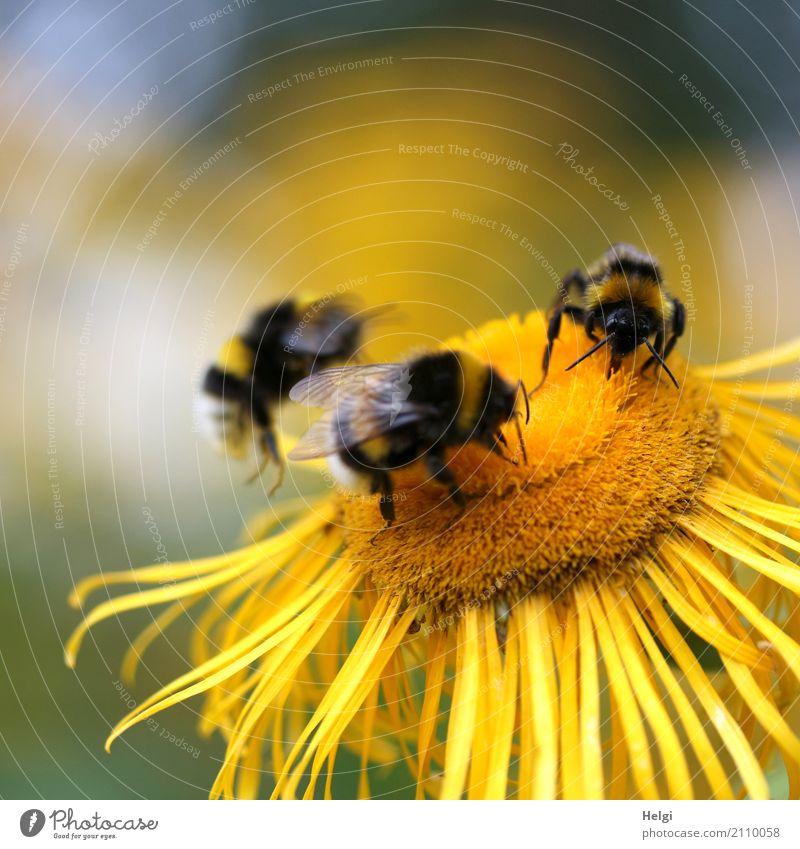 gemeinsame Mahlzeit Natur Pflanze Sommer Tier schwarz Leben Umwelt gelb Blüte natürlich klein grau Zusammensein Park ästhetisch Idylle