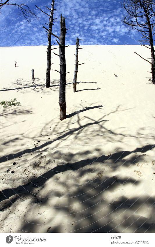 """Düne """"Le Pilar"""" Natur Himmel Baum Sommer Sand Umwelt neu fantastisch natürlich Hügel Baumstamm Blauer Himmel"""