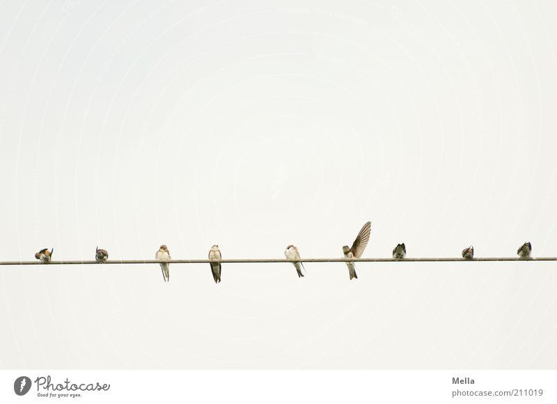 Da lang, Leute! Himmel Tier Linie Stimmung hell Zusammensein Vogel klein frei sitzen Elektrizität Tiergruppe Kabel natürlich Mut Wildtier