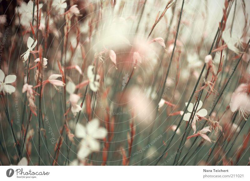Gefühle Umwelt Natur Pflanze Frühling Sommer Klima Schönes Wetter Blume Gras Sträucher Blüte Wildpflanze Bewegung Blühend leuchten Wachstum ästhetisch schön