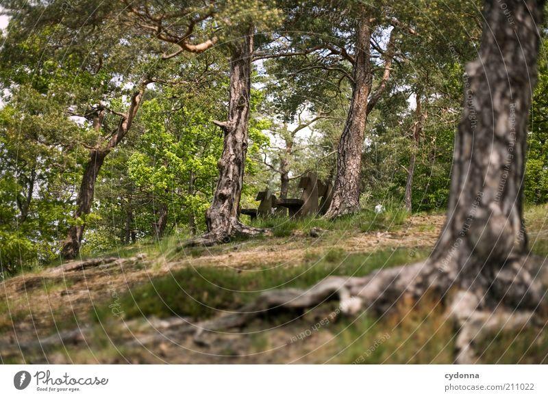 Waldbank Natur Baum Sommer ruhig Einsamkeit Wald Leben Landschaft Umwelt Zeit Ausflug Pause Bank Ziel Vergänglichkeit Idylle