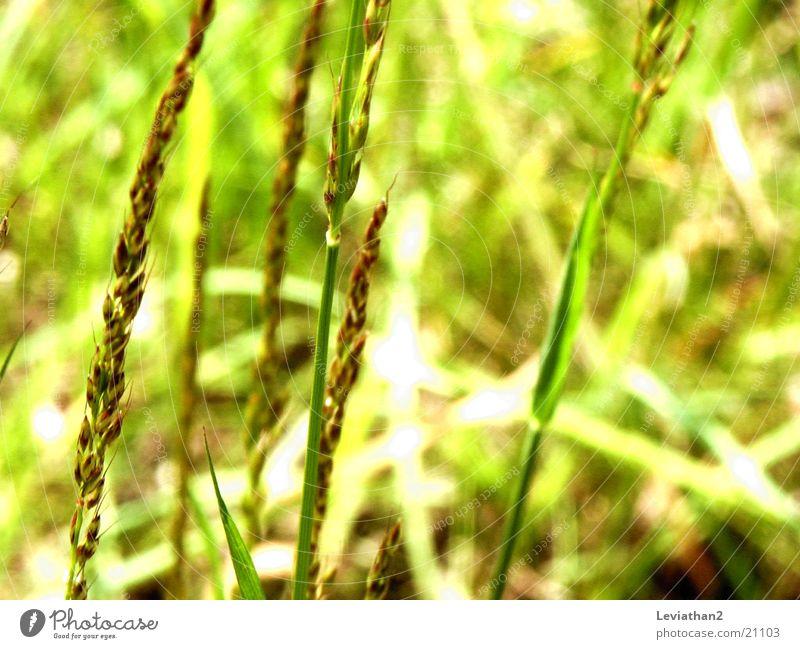 Frühlingsfarben grün Sommer gelb Farbe Wiese Gras Frühling Kraft