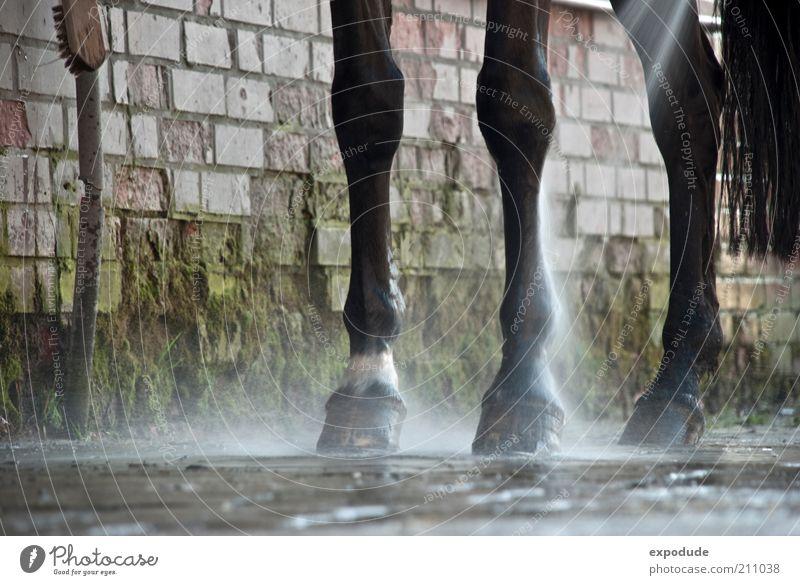 Dreibein Reiten Tier Nutztier Pferd 1 Bewegung authentisch dreckig Verantwortung Reinlichkeit Sauberkeit Perspektive Farbfoto Außenaufnahme Menschenleer
