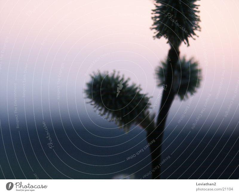 unidentifizierbare Weidenkätzchen Frühling Sonnenuntergang Unschärfe Nahaufnahme weich Pastellton Abend