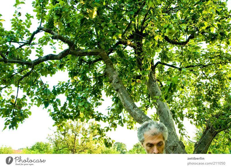 Fehlauslösung Mensch Mann Natur Baum Pflanze Erwachsene Erholung Kopf Haare & Frisuren Garten Park maskulin Nase Wachstum 45-60 Jahre Stirn