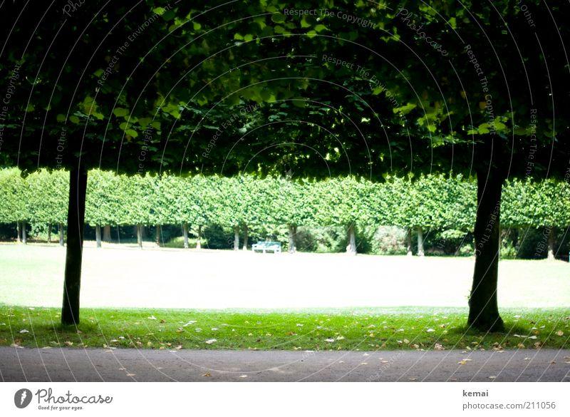 Akkurate Parkbäume Umwelt Natur Landschaft Pflanze Sonnenlicht Sommer Schönes Wetter Wärme Baum Gras Grünpflanze Garten Wiese Schlosspark hell grün beschnitten
