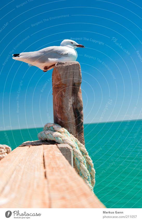 Möwe Leben Sommer Natur Tier Wasser Wolkenloser Himmel Schönes Wetter Küste Vogel 1 sitzen Erholung ruhig Feder Schnabel Pfosten Seil Holz Farbfoto