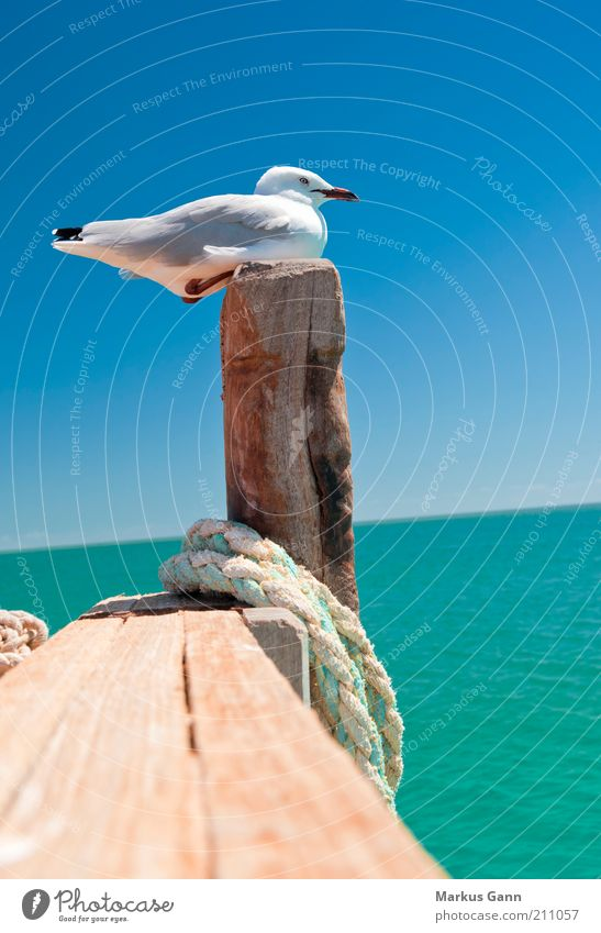 Möwe Natur Wasser Sommer ruhig Tier Leben Erholung Holz Vogel Küste Seil sitzen Feder Schönes Wetter Schnabel