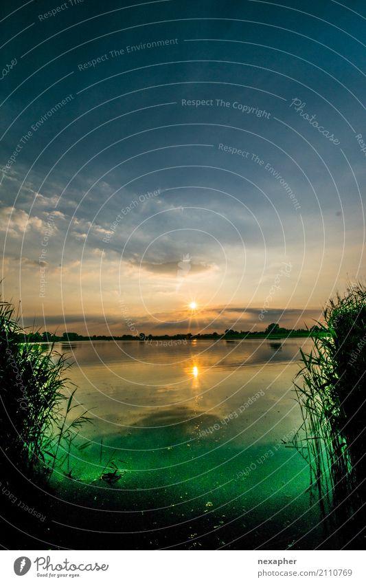 See mit leuchtenden Algen im Sonnenuntergang Umwelt Natur Landschaft Wasser Himmel Sonnenaufgang Frühling Sommer Pflanze Gras Grünpflanze Schilfrohr Küste