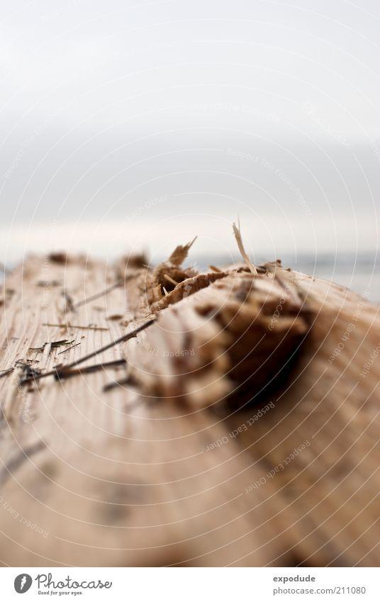 Holzweg Umwelt Natur Pflanze Baum Küste Strand Ostsee nah Gefühle Bruch Umweltschutz Zerstörung Farbfoto Außenaufnahme Nahaufnahme Menschenleer